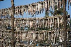 Les poissons ont gardé pour sécher - 6 photos stock