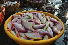 Les poissons ont maintenu en vente dans la poissonnerie, village de Harney, Konkan photo stock