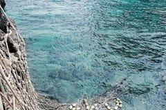 Les poissons prennent au filet dans l'océan bleu Photo stock