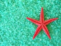 Les poissons rouges star et salent Photographie stock