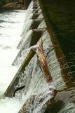 Les poissons sautant dans le barrage Photo libre de droits