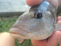 Les poissons sont des amis Image stock
