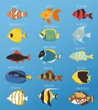 Les poissons tropicaux exotiques emballent l'illustration plate de vecteur de race de couleurs d'océan d'espèces de nature aquati Photographie stock