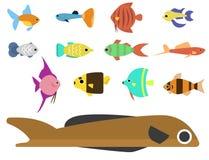 Les poissons tropicaux exotiques emballent l'illustration plate de vecteur de race de couleurs d'océan d'espèces de nature aquati Photos stock
