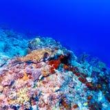 Les poissons tropicaux s'approchent du récif coralien coloré Image libre de droits