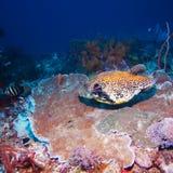 Les poissons tropicaux s'approchent du récif coralien coloré Images stock
