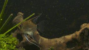 Les poissons tropicaux se réunissent dans l'aquarium bleu d'eau de mer de récif coralien Paradis sous-marin Photo stock