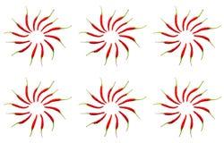 Les poivrons végétaux rouges de cercles du modèle six modèlent le fond lumineux infini naturel Photographie stock libre de droits