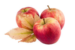Les pommes avec Autumn Leaf ont isolé Photo stock