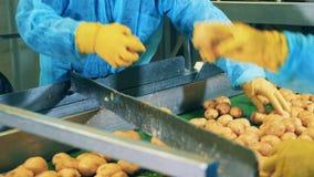 Les pommes de terre crues obtiennent la coupe par des employés d'usine clips vidéos