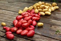 Les pommes de terre jaunes et rouges ont dispersé sur le plancher en bois dehors dans le village pour sécher par temps ensoleillé Image libre de droits
