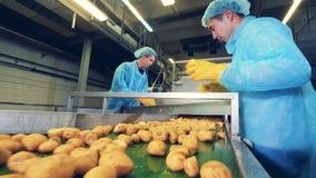 Les pommes de terre obtiennent la coupe par deux spécialistes masculins clips vidéos