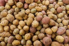 Les pommes de terre sur le compteur du magasin photographie stock