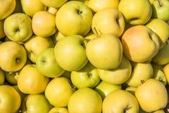 Les pommes jaunes se ferment vers le haut du fond dans le jour d'été Image libre de droits