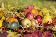 Les pommes, les potirons et les feuilles d'automne rouges organiques en automne font du jardinage Photographie stock libre de droits