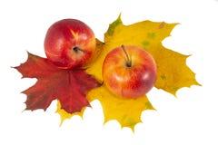 Les pommes rouges avec l'érable laisse des couleurs d'automne photo libre de droits
