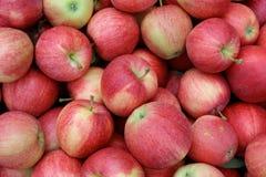 Les pommes rouges fraîches lumineuses corrigent la forme ronde, les pommes rouges de fond de nourriture avec des coupes Image libre de droits