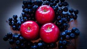Les pommes sont ashberry rouge et noir mûr photo libre de droits