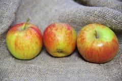 Les pommes sur le fond de la toile image stock