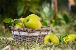 Les pommes vertes sont dans le panier Photos stock
