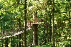 Les ponts suspendus de cime d'arbre sur le rivage du nord de Vancouver Photo stock