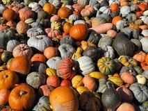 Les potirons colorés de différentes sortes sont partout photographie stock libre de droits