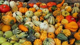 Les potirons décoratifs pour Halloween font la fête en vente au greengro Photo stock