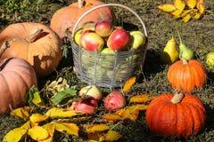 Les potirons et un panier des pommes sont dans le jardin sur l'herbe photographie stock