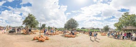 Les potirons panoramiques font du jardinage et les gens à la ferme locale dans le Texas, Ame photographie stock