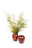 Les pots de poterie de terre peuvent planter d'isolement avec le fond blanc Image stock