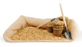 Les pots de tourbe ont rempli de graines d'avoine et de peu de truelle de jardinage et Photographie stock