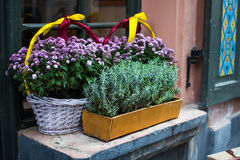 Les pots et le panier avec l'automne fleurit sur le rebord de fenêtre dehors Photo libre de droits