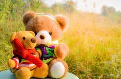 Les poupées mignonnes d'ours avec des fleurs engazonnent le fond et la belle lumière du soleil pendant les vacances de matin Images stock