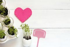 Les pousses vertes dans une coquille d'oeufs dans le rose ont senti le coeur et le rose tabulaires sur une table blanche la vue s Photos libres de droits
