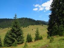 Les prés verts frais, les fleurs de floraison, les fermes typiques et la montagne couronnée de neige complète à l'arrière-plan Photos stock
