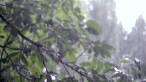 Les pr?cipitations de grosse averse de d?luge de douche de forte pluie viennent pendant la journ?e clips vidéos