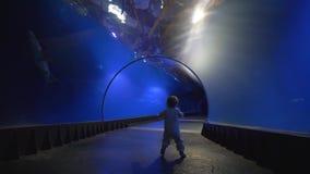 Les premières étapes de bébé dans le tunnel d'aquarium, peu d'enfant marche et regarde le monde sous-marin avec la curiosité banque de vidéos