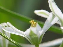 Les premières fleurs d'une saison. Photo stock