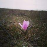 Les premières fleurs de source Photos libres de droits