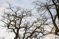 Les premiers oiseaux de source ont obtenu. Photo libre de droits