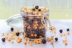 Les produits de préparation ont traité les pots colorés frais de fruits d'été Photographie stock libre de droits