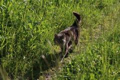 Les promenades de chat dans une herbe Photo stock