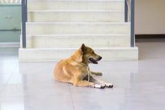 Les propriétaires rouges de chien attendent l'avant solitaire d'escalier Image stock