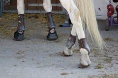 Les protections en cuir pour des jambes et des boules des chevaux antérieurs et postérieurs ont installé avec l'angle de vue de c Photographie stock