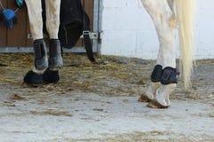 les protections en cuir pour des jambes et des boules des chevaux antérieurs et postérieurs ont mis l'angle de vue en place du cô Photos stock