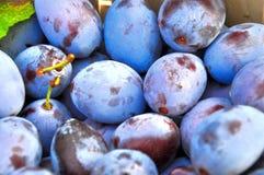 Les prunes Image stock