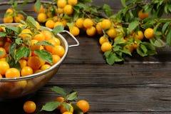 Les prunes fraîches jaunes en métal roulent sur la table en bois foncée image libre de droits