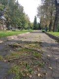 Les puits et les nids de poule sur une route rurale après pluie en été parmi les arbres verts, Russie image libre de droits