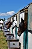 Les pullovers d'exposition attendent dans leurs stalles le prochain événement Photos stock