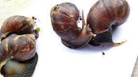 Les quatre escargots rampent images stock